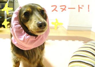 11_20081201235055.jpg