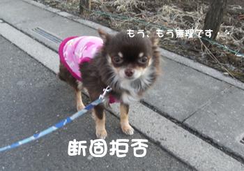 11_20090119215142.jpg