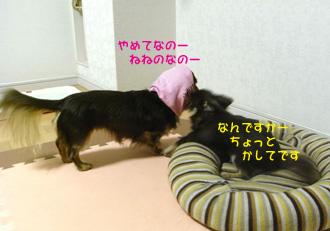 13_20081201235154.jpg