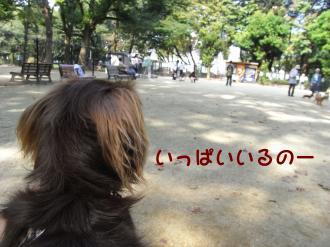 26_co.jpg