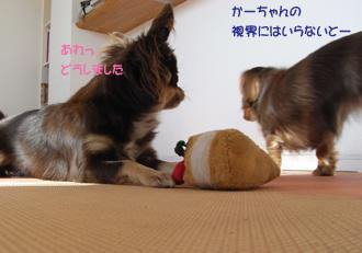 33_20081101233037.jpg