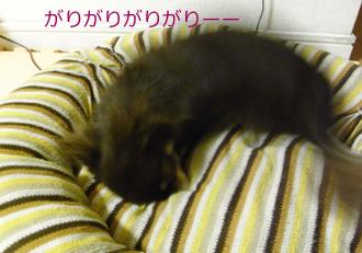 37_20081104214800.jpg