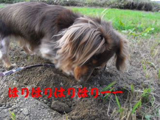44_20081108214439.jpg