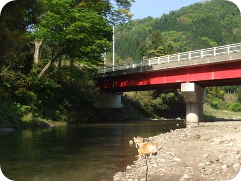 鮎のいる川