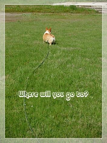 何処へ行くんだ?