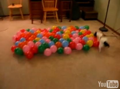 100ballon.jpg