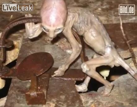 alien_20090831101622.jpg