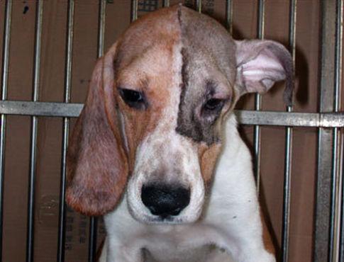 dog-face-transplant.jpg
