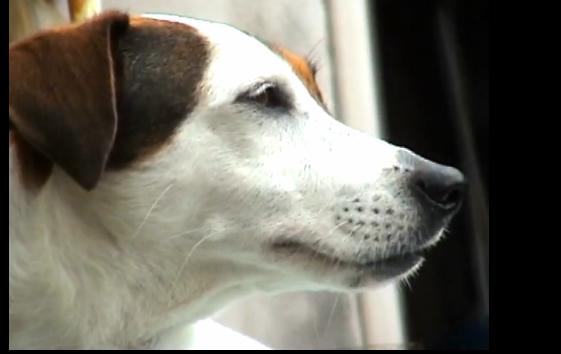 dog_20090829172355.jpg