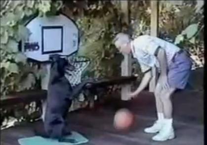dogbasket.jpg
