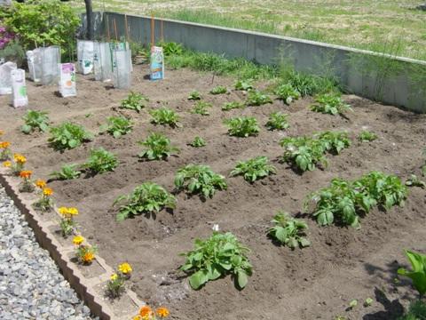 庭園その2-3