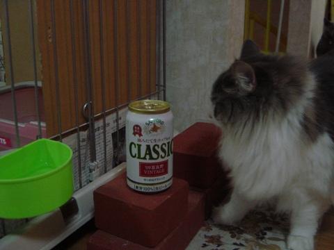富良野缶4