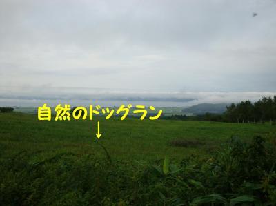 DSC06881_20090828093843.jpg