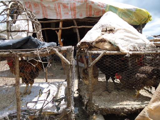 Kalomo Market 8