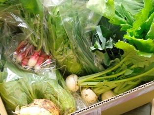 のらくら農場・野菜(ブログ用)