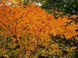 紅葉オレンジ(ブログ用)