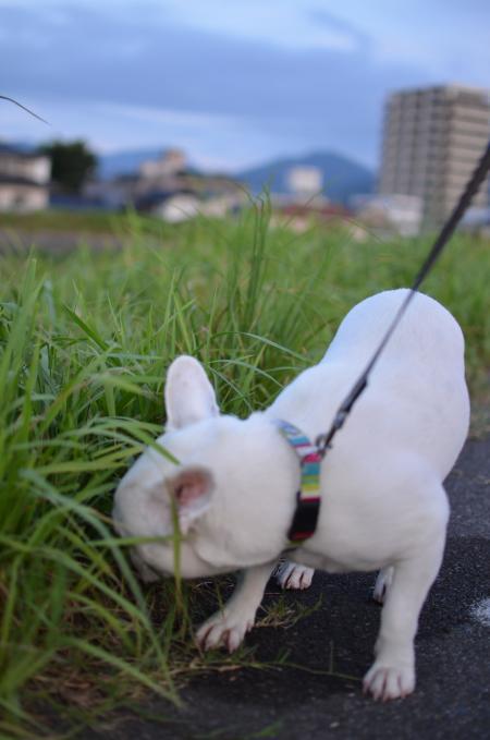ぐうたら散歩2