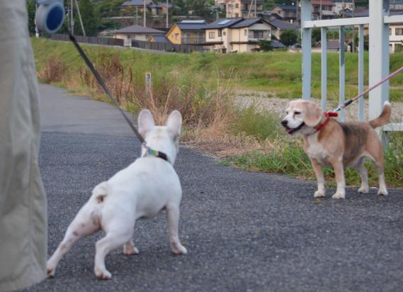 ぐうたら散歩4