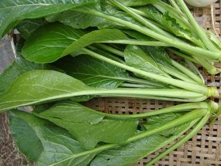 小松菜 1