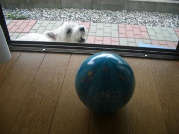 遊びたいの!
