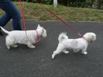 並んで散歩
