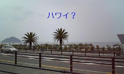 20090420163706.jpg