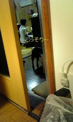 20090611155828.jpg