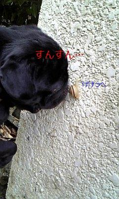 20090625155136.jpg