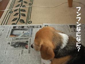 新聞読む犬