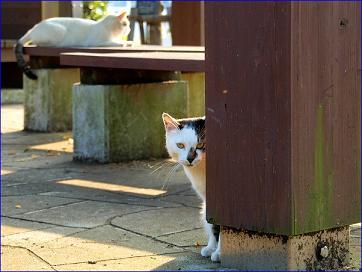 目撃猫(<br />たま)