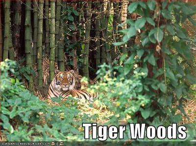 虎がいる森