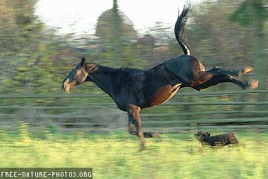 躓くHORSE