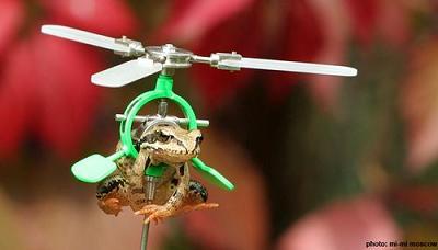 空飛ぶカエル