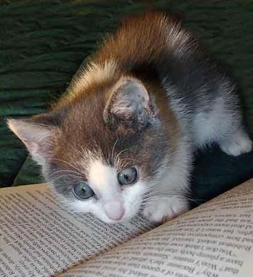 猫って15年しか生きられないの~