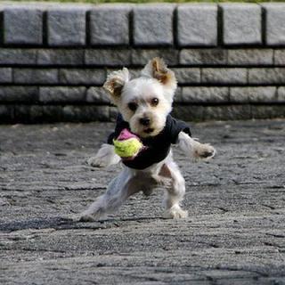 テニスBALLとペニスBALL
