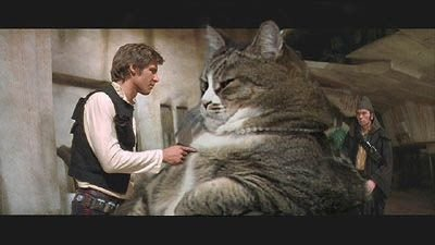 jabba the cat