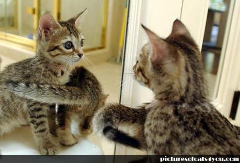 funny-cats-vs-mirror[1]