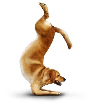 yoga-dogs-08[1]