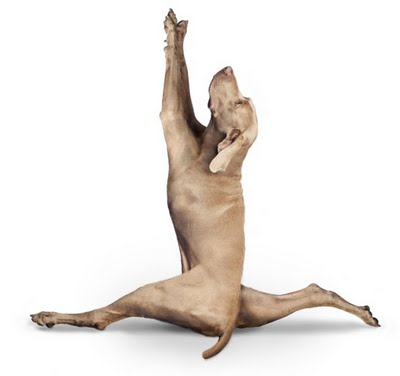 yoga-dogs-05[1]