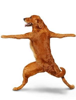 yoga-dog3[1]