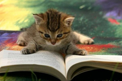 study_cat[1]