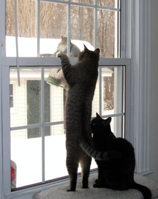 猫タワーほすい
