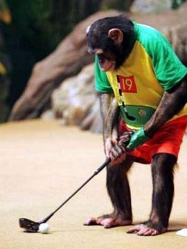_chimp_golf