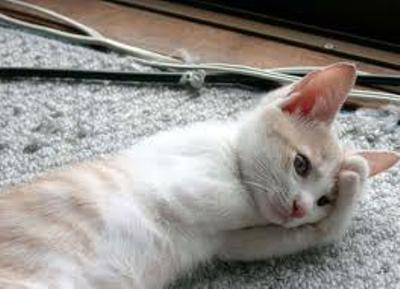 cat193