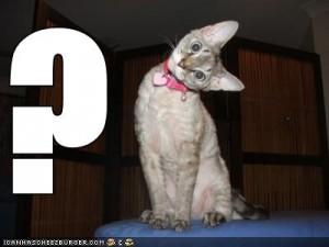 internet-marketing-question-cat-300x225[1]