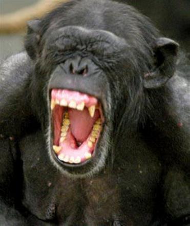 screaming-chimp1[1]