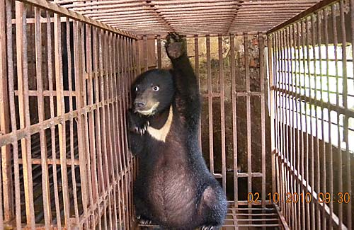 110519bear-in-cage[1]