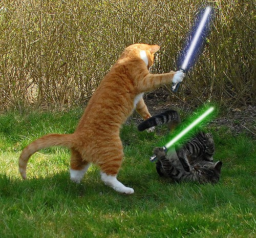 star-wars-light-saber-cats-lolcat-kittens-fight[1]