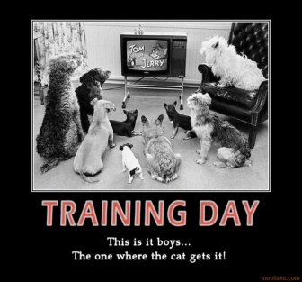 training-day-animal.jpg