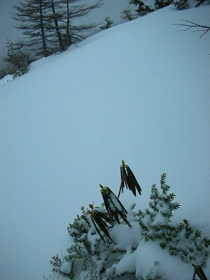 s-08年3月20日 黒斑山 (木)雪  005